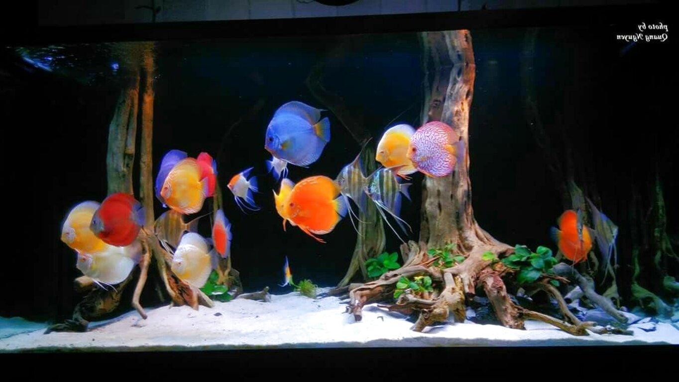 discus aquarium for sale