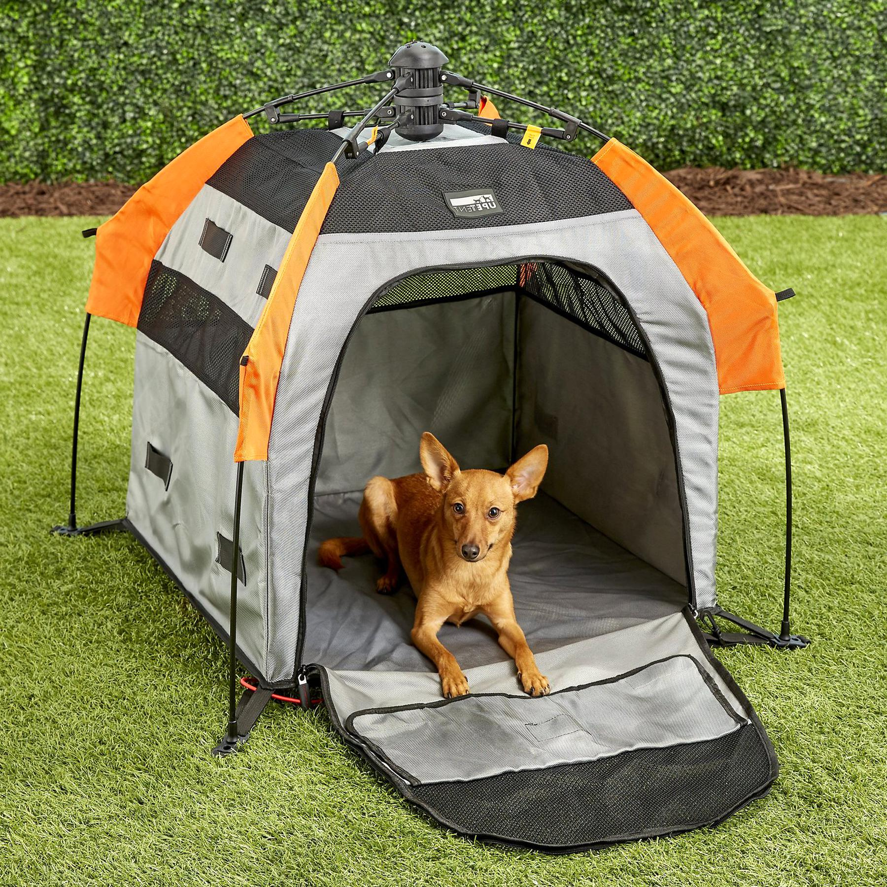 dog tent for sale