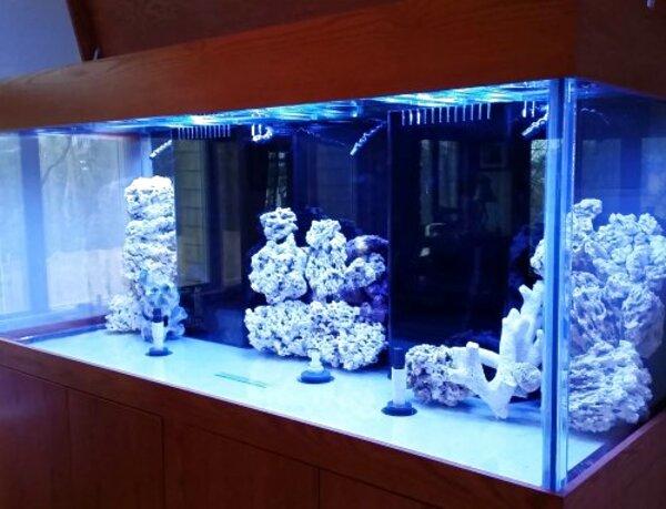 custom glass aquariums for sale
