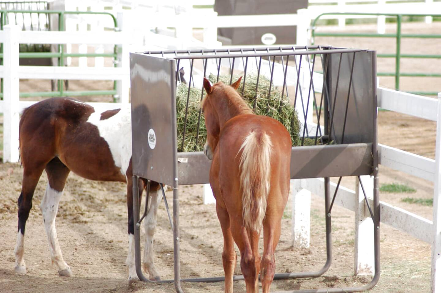 horse hay feeders for sale