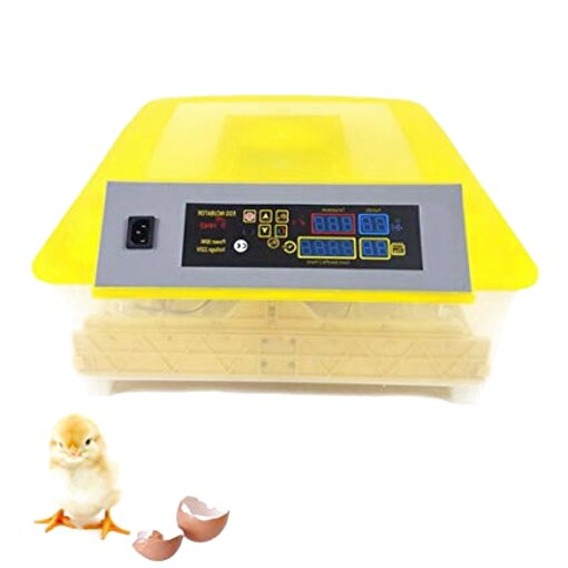 duck incubator for sale