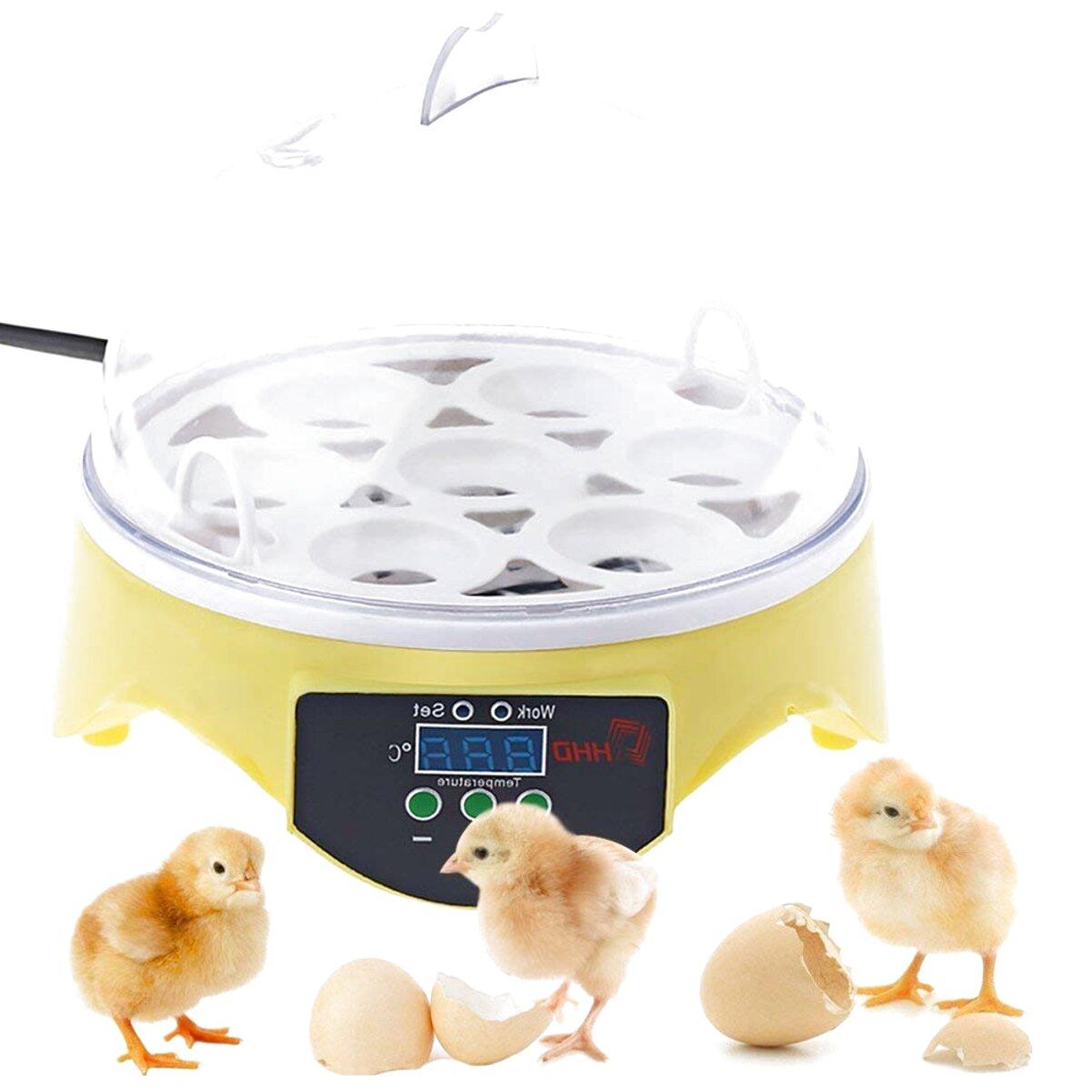 chicken incubator for sale