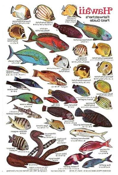 hawaiian fish for sale