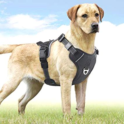 dog harness for sale