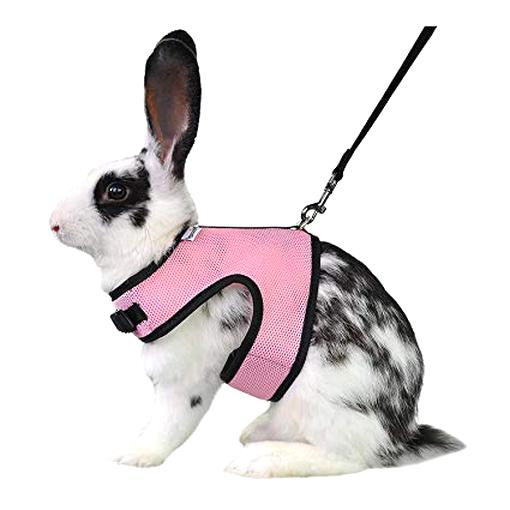 rabbit harness for sale