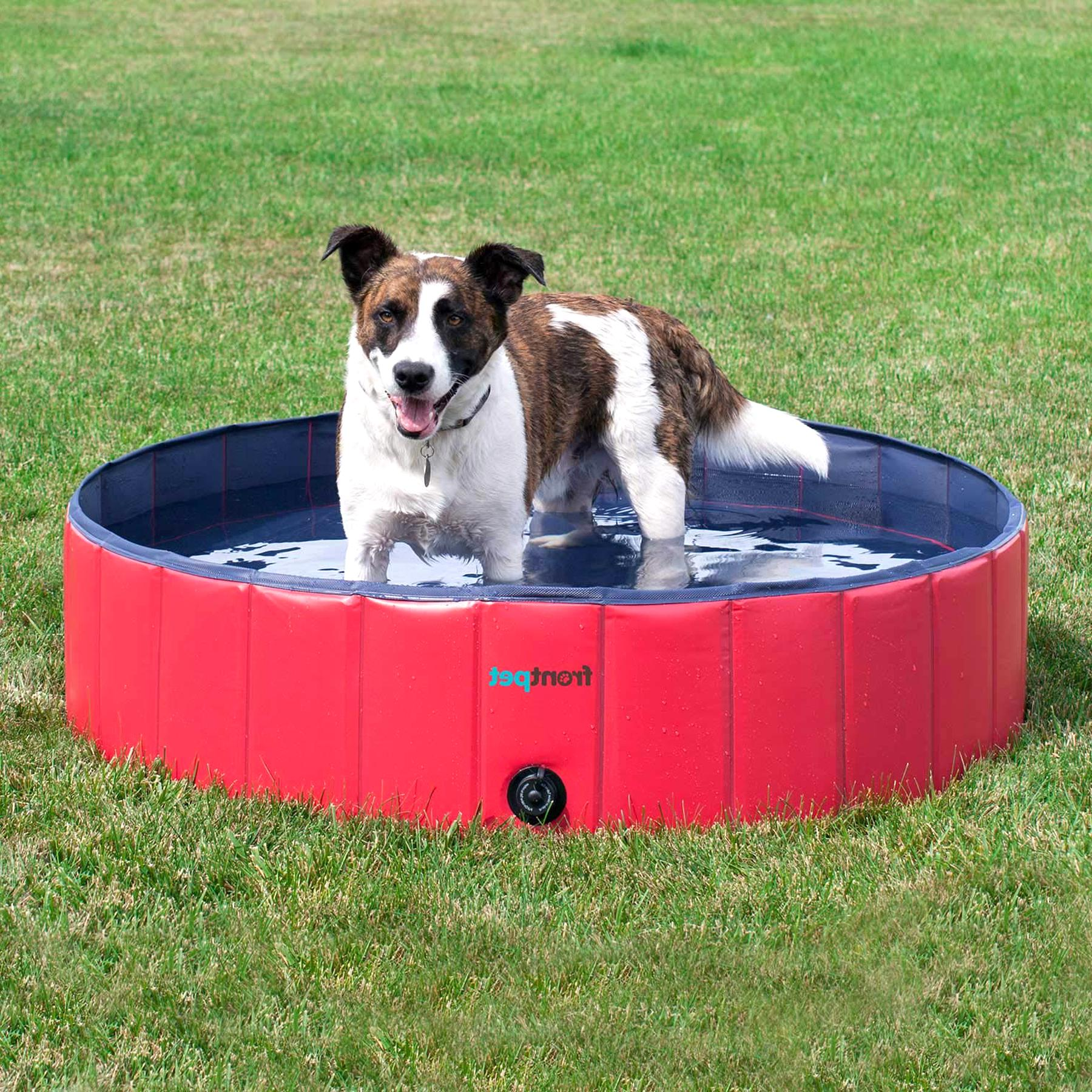 dog pool for sale