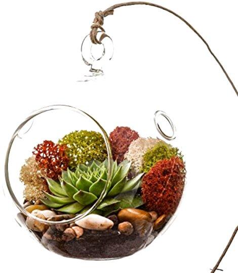 succulent terrarium for sale