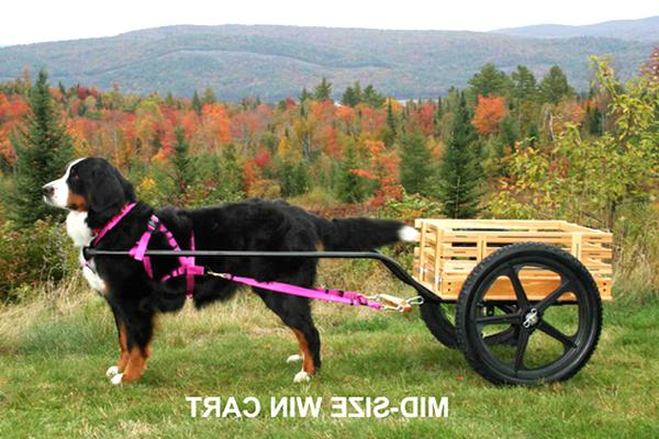 dog cart for sale