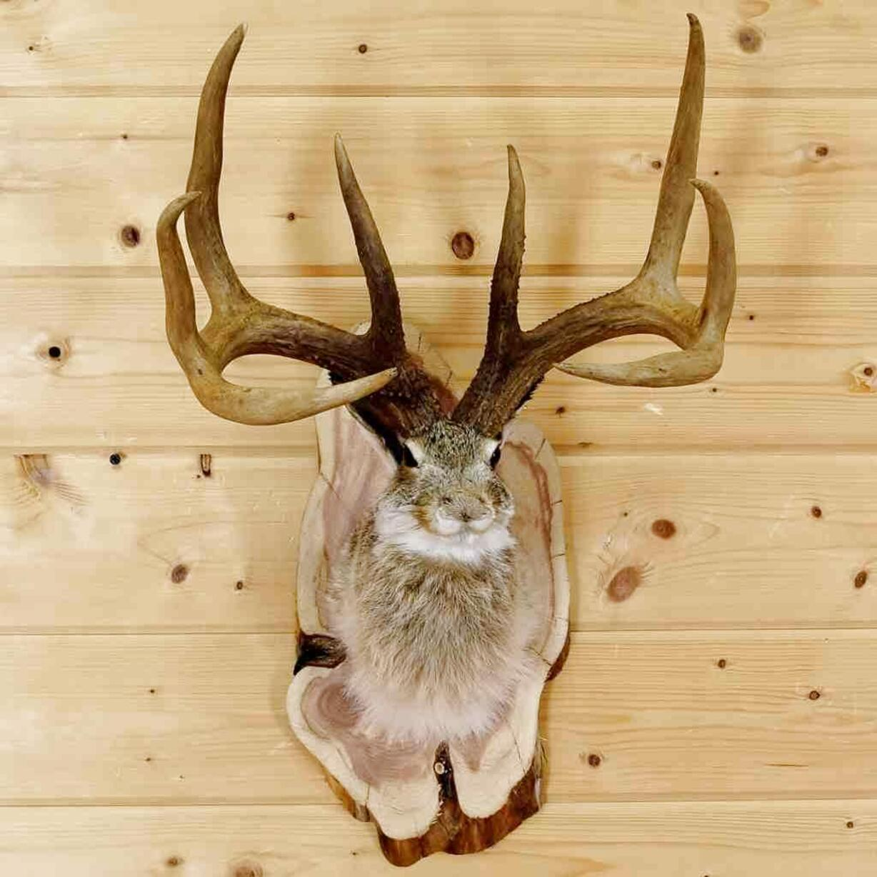 jackalope taxidermy for sale
