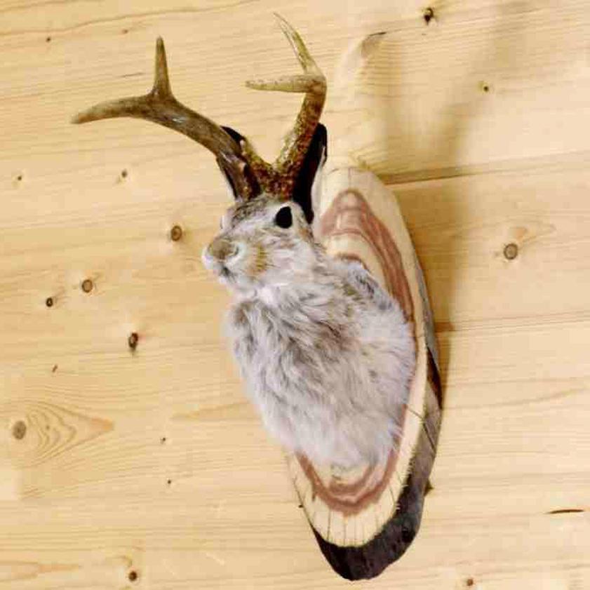 jackalope mount for sale