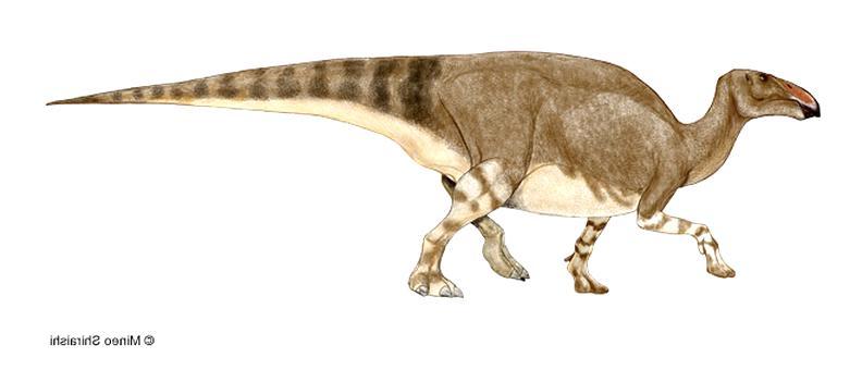 hadrosaur for sale