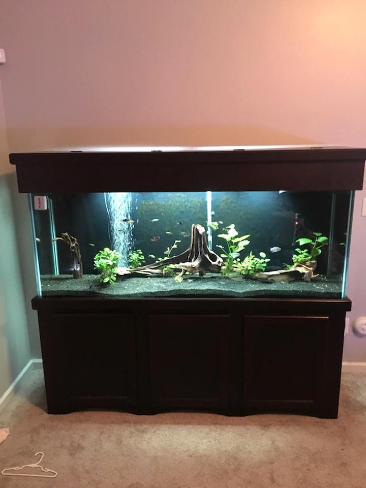 Used Fish Aquarium For Sale Near Me - Aquarium Views