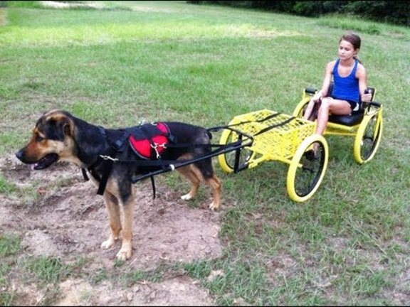 dog pull wagon for sale