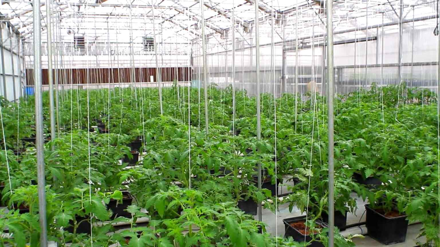 hydroponic greenhouse for sale
