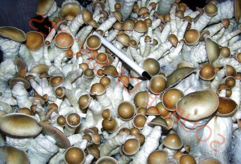 Mushroom Sale