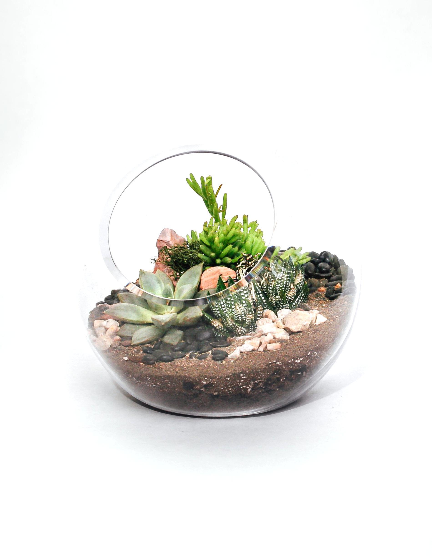 terrarium for sale